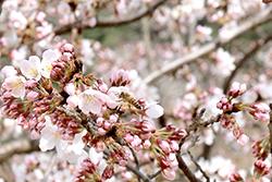 봄의 기운 받으러 블루원 디아너스로 오세요:) 관련이미지
