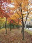 가을이 오는 소리.. 관련이미지