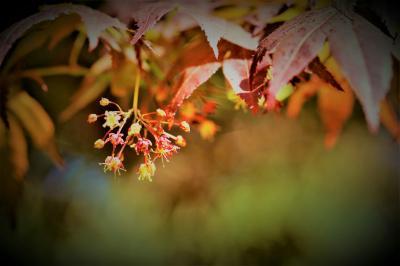 향기로운 봄꽃이 소식을 전합니다. 관련이미지